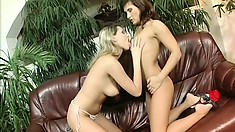 Three hot babes embark on a lesbian journey to find pleasure with sex toys for company